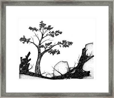 Beach Pine Framed Print by Jason Carroll