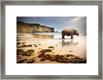 Beach Rhino Framed Print by Carlos Caetano