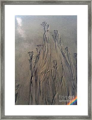 Framed Print featuring the photograph Beach Sand Flowers With Rainbow by Doris Blessington