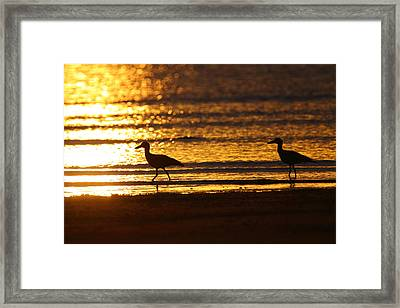 Beach Stone-curlews At Sunset Framed Print by Bruce J Robinson
