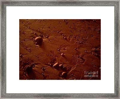 Beach Stones In Bonfire Glow Framed Print by Wendy Marelli