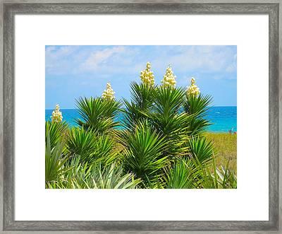 Beach Yucca In Blossom Framed Print