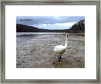 Framed Print featuring the photograph Beachcomber by Brian Stevens