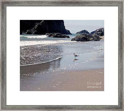 Beachcomber Framed Print by Sharon Elliott