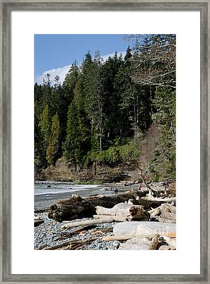 Beached Logs China Beach Vancouver Island Bc Framed Print by Andy Smy