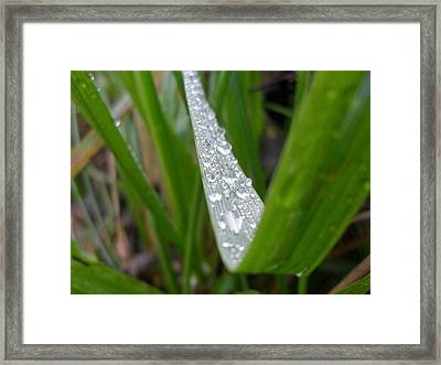 Beaded Blade Framed Print