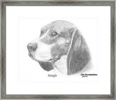 Framed Print featuring the drawing Beagle by Jim Hubbard