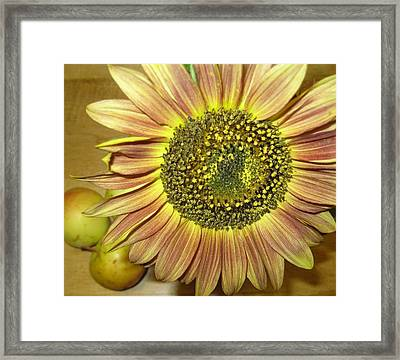 Beaming Sunflower Framed Print by Tracy Fallstrom