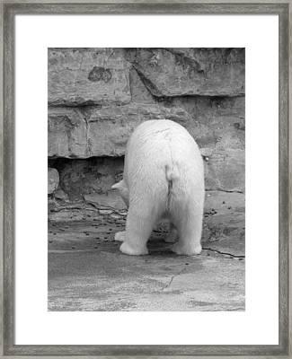 Bear Butt Framed Print