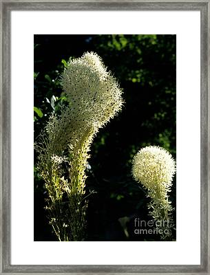 Bear-grass I Framed Print by Sharon Elliott