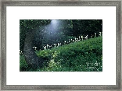 Bear-grass Ridge Framed Print by Sharon Elliott
