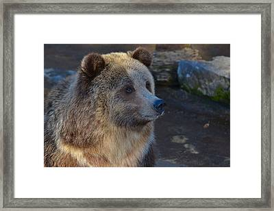 Bear Joy Framed Print