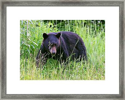 Framed Print featuring the photograph Bear On The Hillside by Myrna Bradshaw