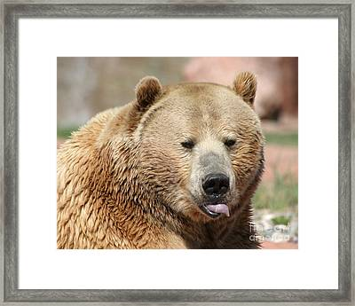 Framed Print featuring the photograph Bear Rasberry by Living Color Photography Lorraine Lynch