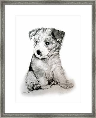 Bearded Collie Pup Framed Print by Michelle Harrington