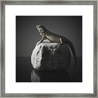 Bearded Dragon On Rock Framed Print by Darren Woolridge Photography - www.DarrenWoolridge.com