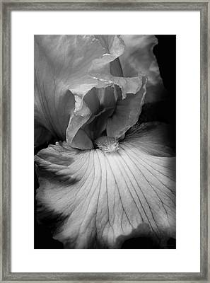 Bearded Iris Flower Black And White Framed Print by Jennie Marie Schell