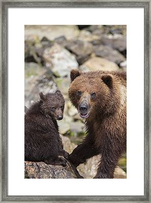 Bears At A River Framed Print by Tim Grams