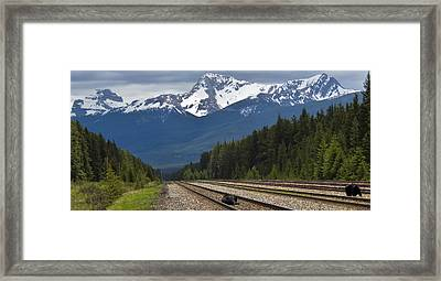 Bears On A Track Framed Print