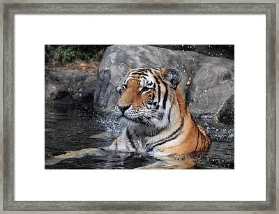 Beating The Heat Framed Print by Mike Martin