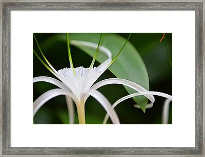 Beaty Of The Nature Framed Print by Nataly Fomina