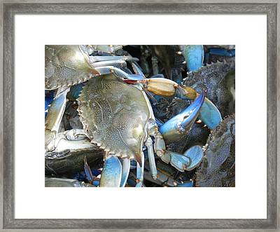 Beaufort Blue Crabs Framed Print by Patricia Greer
