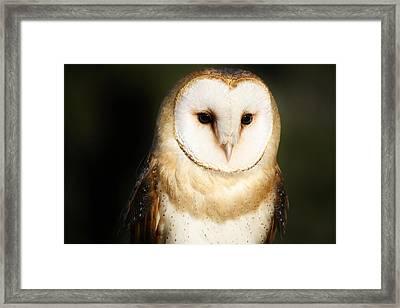 Beautiful Barn Owl Framed Print by Paulette Thomas