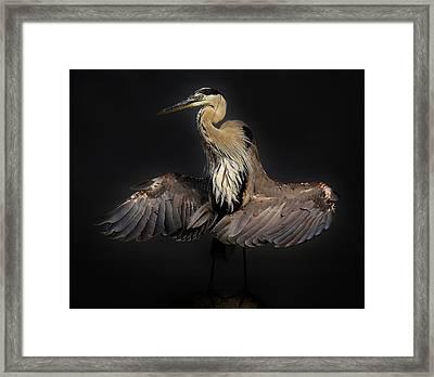 Beautiful Blue Heron Wings Framed Print by Paulette Thomas
