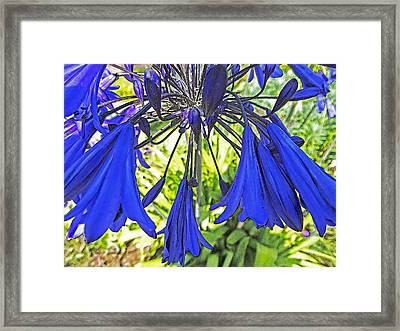 Beautiful Bluebells Close-up Framed Print by Anne Mott