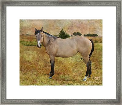Beautiful Buckskin Framed Print by Betty LaRue