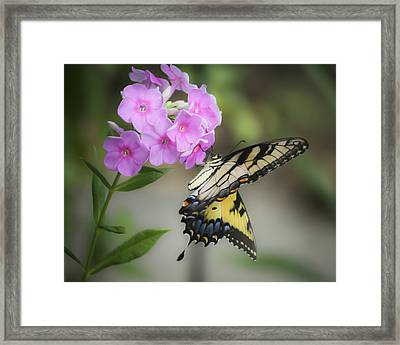 Beautiful Butterfly Framed Print by Teresa Mucha