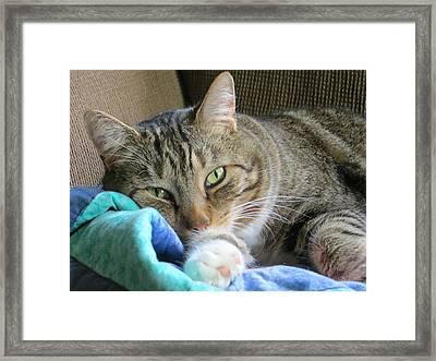 Beautiful Cat Framed Print by Pamela Turner
