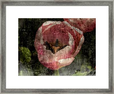Beautiful Decay Framed Print