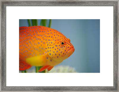 Beautiful Fish Framed Print by Michael Krahl