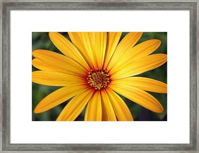 Beautiful Flower Framed Print by Michael Krahl