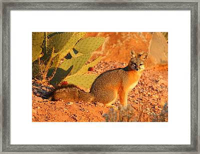 Beautiful Fox Framed Print