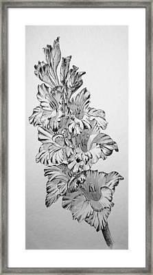 Beautiful Gladiolas Framed Print by Eleonora Perlic
