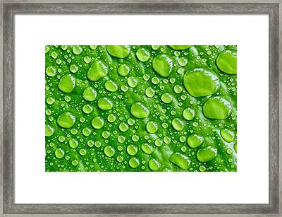 Beautiful Green Leaf With  Water Drops Framed Print by Chatuporn Sornlampoo
