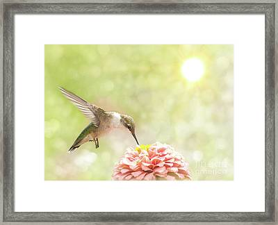 Beautiful Hummingbird Framed Print