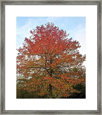 Beautiful In Red Framed Print by Karen Grist