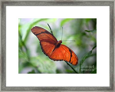 Beautiful Julia Framed Print