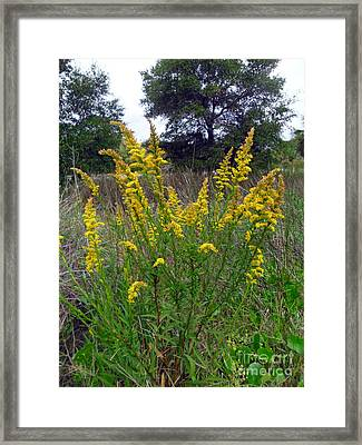 Framed Print featuring the photograph Beautiful Marigolds by Doris Blessington