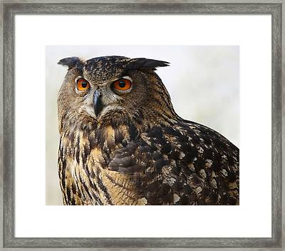 Beautiful Owl Framed Print by Paulette Thomas