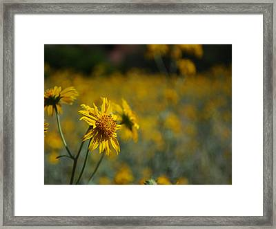 Beautiful Photography - Flowers 04 Framed Print by Earl Bowser