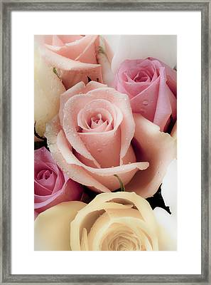 Beautiful Roses Framed Print by Garry Gay