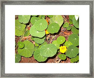 Beautiful Round Green Leaves Of A Plant With Orange Flowers Framed Print
