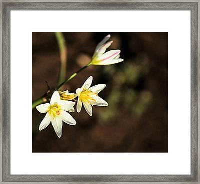 Beautiful Simplicity Framed Print