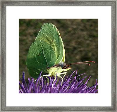 Beautiful Spring Framed Print by Eric Kempson