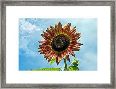 Framed Print featuring the photograph Beautiful Sunflower by Susan Leggett