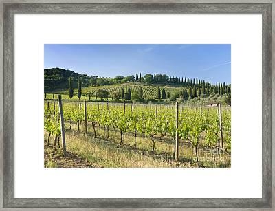 Beautiful Vineyard Framed Print by Rob Tilley